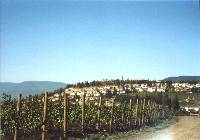 Vignoble Mission Hill